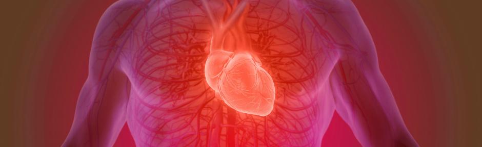 Man's torso showing circulatory system