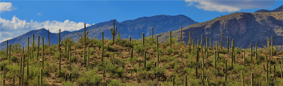 Arizona desert and mountain scene